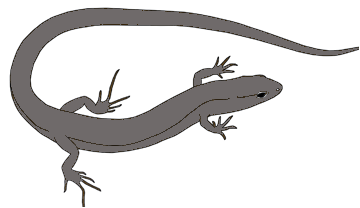 Reconstruction of a Cretaceous Lizard.