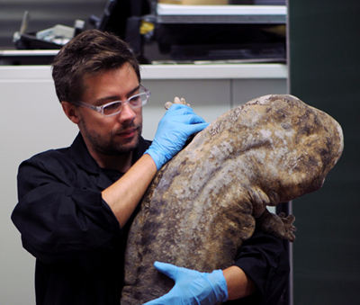 Researcher Egon Heiss with a live specimen (Foto: Egon Heiss)