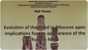 Evolution of the hand in Miocene apes: implications for the appearance of the human hand