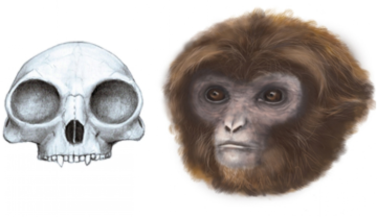 Pliobates cataloniae, a new primate species at the root of the tree of extant hominoids