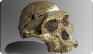 ¿Hand or brain? Debate on the manual skills of Australopithecus