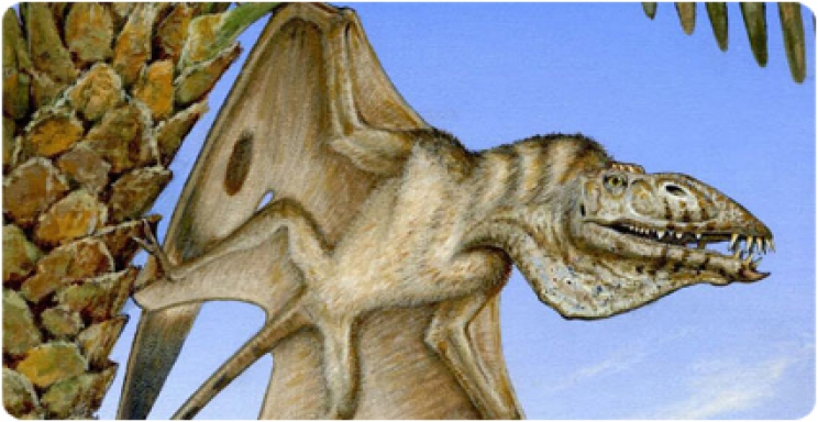 A rare Triassic pterosaur discovered in Utah