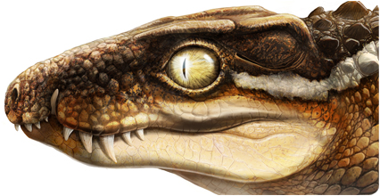 Recreation of life appearance of the new species of crocodile Ogresuchus furatus (Aina and Agnès Amblás / ICP)
