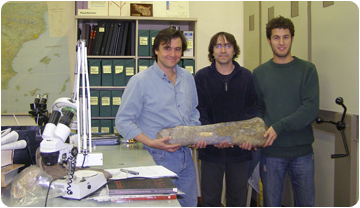 The researchers with one of the femurs that have been studied. From left to right, José Ignacio Canudo (UZ), Àngel Galobart (ICP) & Bernat Vila (UZ).