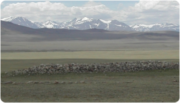 Mongolia and the Altai Mountains: origins of genetic blending between Europeans and Asians