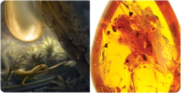 Earliest example of a rapid-fire tongue found in rare extinct amphibians preserved in amber