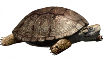 Polysternon isonae, a new species of turtle that lived with dinosaurs in Isona (Spanish Pyrenees)
