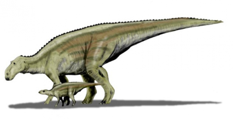 Shedding light on the development of baby duck-billed dinosaurs