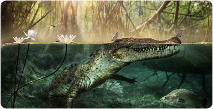 Found in Lybia the ancestor of american crocodiles
