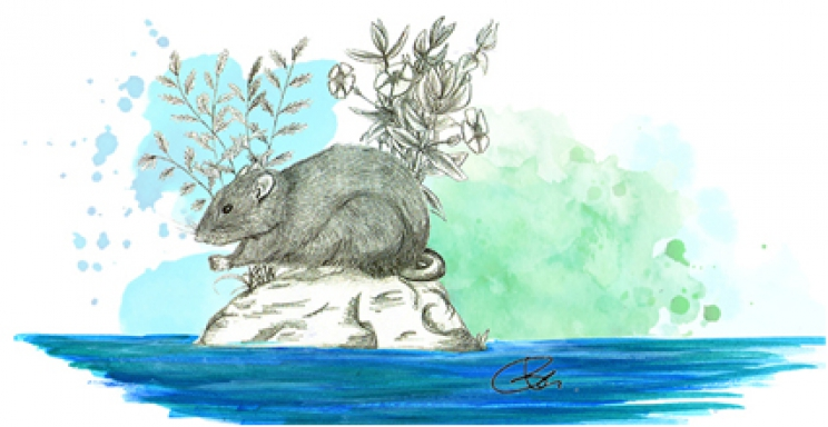 From island to island: the trip of the giant rat Mikrotia magna